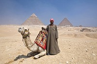Kameltreiber vor Pyramiden von Gizeh, Kairo, Aegypten, Camel Driver in Front of Pyramid of Gizeh, Cairo, Egypt