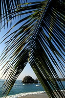 View through palm leaf of beach and ocean