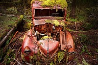 Old truck covered with moss
