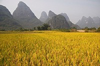 Paddy Fields, Yangshuo, Guilin, China