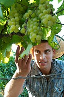 Young man looking at grapes in vineyard
