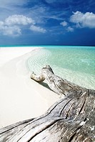 tropical beach: tree trunk left on the sand