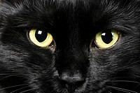 domestic animals: close_up of cat eyes