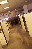 Female Worker Walking Through An Empty Office