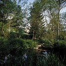 Panoramic view of a pond in the wilderness