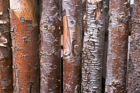 Close_up of a fence of wooden logs