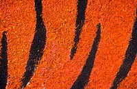 Close_up of an orange and black animal print