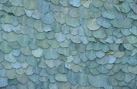 Close_up of a pattern of overlapping leaves