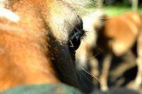 Close_up of a horse's eye