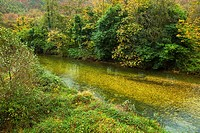 Salmon area. Bedon river. Asturias. Spain.
