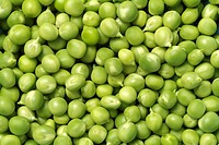 Green Peas, Close Up, Organically Grown and Freshly Podded Produce