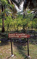 Vanilla plantation in Seychelles