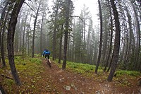 A mountain biker riding single track track of Jumping Pond Ridge in Kananaskis country, AB