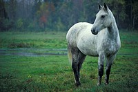 Horse in Field, Morrisburg, Ontario, Canada