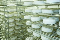 Fresh Cheese at the Natural Pastures production facility in Courtenay, The Comox Valley, Vancouver Island, British Columbia, Canada.