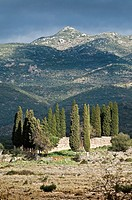 Landscape with Cypress trees near Proastio and Kardamyli, in the Outer Mani, Southern Greece