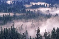 Morning mist rising in Yosemite National Park, California.