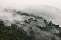fog covered forest on ai_petri mountain on crimea