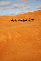 Caravan in Erg Chebbi, Merzouga, Morocco
