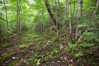 Pemigewasset Wilderness - Remnants of the old East Branch & Lincoln Railroad bed  This section lead into Redrock Ravine  Located in Franconia, New Ham...