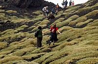 Hikers descending Valle del Bove, on the Southern slopes of Mount Etna, The highest and most active volcano in Europe, Nicolosi, Sicily, Italy July 20...