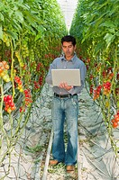 man with laptop computer in a greenhouse growing organic tomatoes