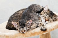Domestic cats, cat and kitten sleeping together