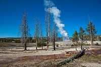 USA, Yellowstone Park, Wyoming, Castle Geyser