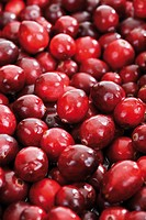 Cranberries Vaccinium macrocarpon, full frame
