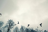 Germany, Hamburg, Seagulls in flight, low angle view