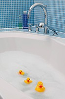 Rubber ducks in bath