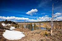 USA, Yellowstone Park, Hayden Valley