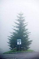 Traffic sign in front of a spruce