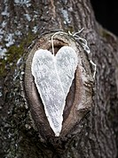 Scandinavia, Sweden, Nacka, Heart shape decoration on tree, close_up