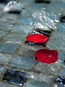 Close_up of rose petals floating on the surface of a pool