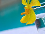 Close_up of a glass with yellow flower at the poolside
