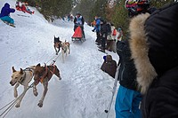 Pirena  Sled dog race in the Pyrenees going through Spain, Andorra and France  La Molina  Girona Province  Catalonia  Spain
