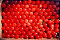 Cherries , India