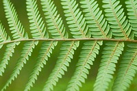 Fern at Eastwoodhill Arboretum in Gisborne, New Zealand