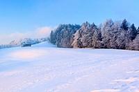 Wald im WInter, Zürcher Oberland, Schweiz
