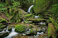 Coal Creek Falls state park, Seattle