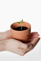 Person holding flower pot