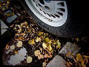 Leaves under car wheel