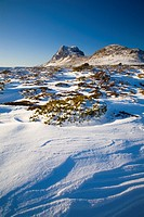 Australia, Tasmania, Cradle Mt - Lake St Clair National Park  Snow covered native bush and the dolerite columns of Cradle Mountain