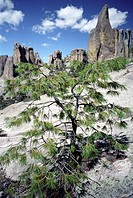 Tree on a rock, Monk´s valley, Creel, Chihuahua, Mexico, America