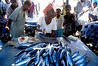 Asia,Yemen,suk samak, fish market