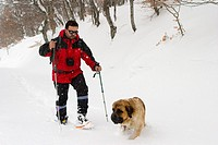 mountaineer with snowshoes in a snow-capped forest moving forward in a slope  Road to Coriscao summit  Picos de Europa National Park  Cordillera Canta...