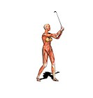 Female muscles. Computer artwork showing the muscle structure of a woman playing golf. These are skeletal, or voluntary, muscles, which are under dire...
