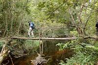 Forest, River, Vale do Paty, Chapada Diamantina, Bahia, Brazil