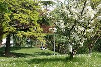 Trees, Parc des Glacières, Bolougne_Billancourt, Hauts_de_Seine 92, Ile de France, France